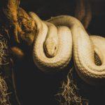 Schlange als Haustier: Woran sollte man denken